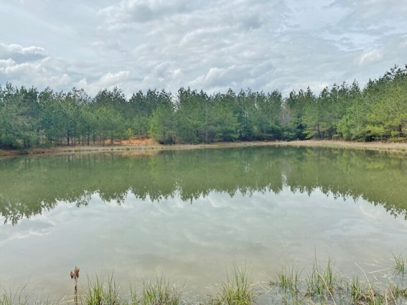 timberland-for-sale-in-Mississippi