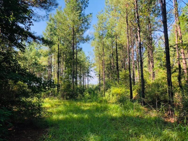 Hunting-land-for-sale-in-Mississippi