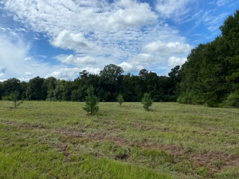 Land for sale in Pike County MS