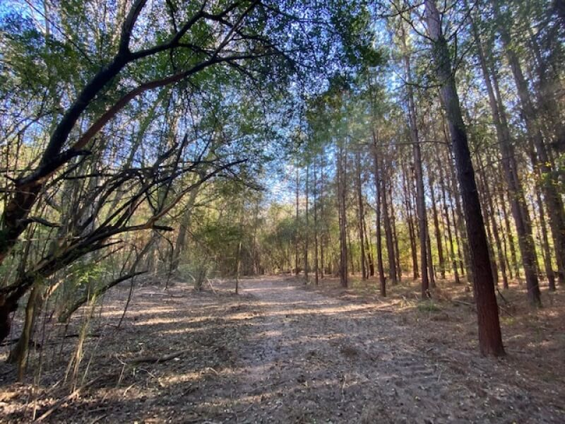 land-for-sale-in-marion-county-ms