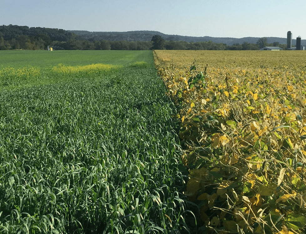 Can Regenerative Agriculture Work In Mississippi?