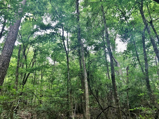 14-acres-recreational-land-for-sale-in-Mississippi